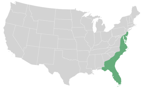 CC-licensed photo from the Wikimedia Commons. Location of the Atlantic Coastal Plain.